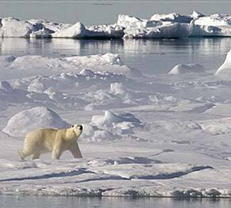 Polar Bear in Baffin Bay