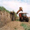 Brazilian farmer harvesting crops