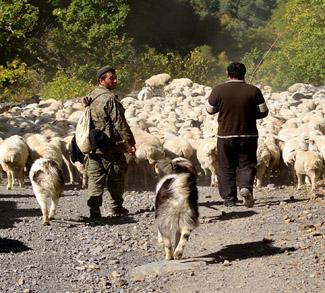 Chechnya, cc Flickr Vladimer Shioshvili, modified