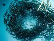 Barricuda Spiral, cc Flickr Robin Hughes