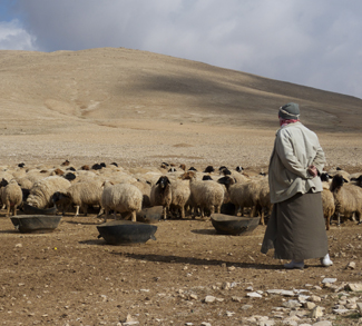 A shepard tends to their flock. Many believe the Syrian civil war to be a result of water conflict.