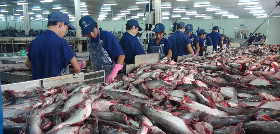 Fishing Frontlines: A Sea Change for Southeast Asia Fish Exports