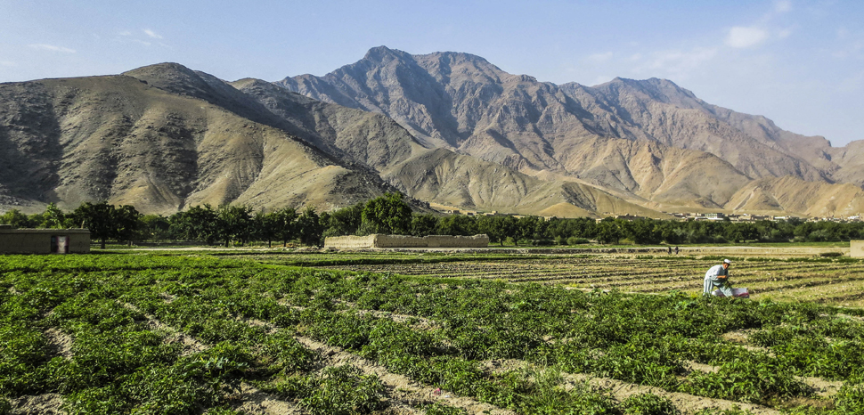 Afghanfarm, cc Flickr Ninara,modified, https://creativecommons.org/licenses/by/2.0/
